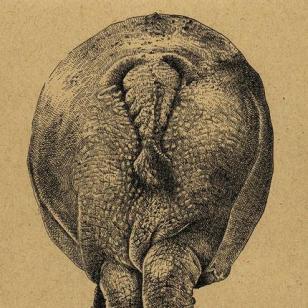Kaart Nijlpaard