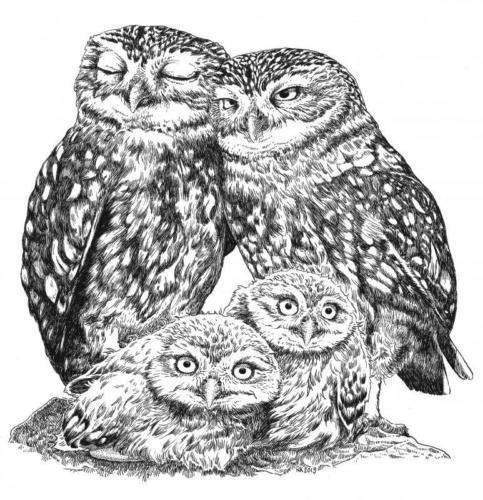 Uiltjes familie (steenuil)