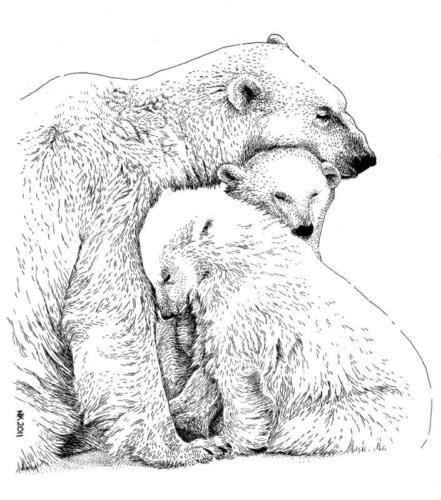 Kaart IJsberen
