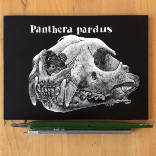 Luipaardschedel