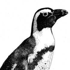 Wildlands Penguin, ansichtkaart 2021