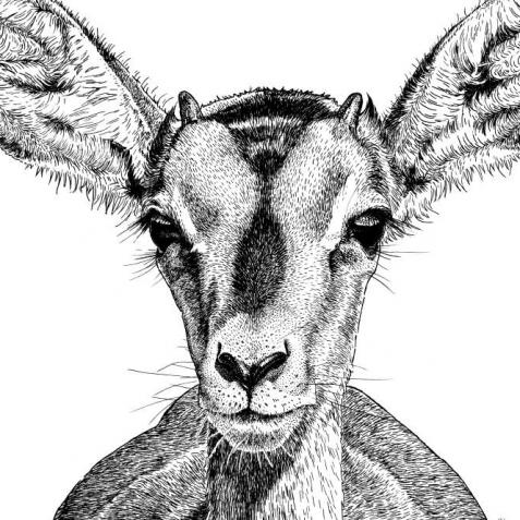 Wildlands Impala