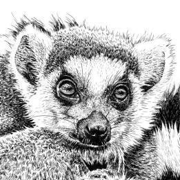 Wildlands Lemur